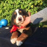 Pomoc veterinara